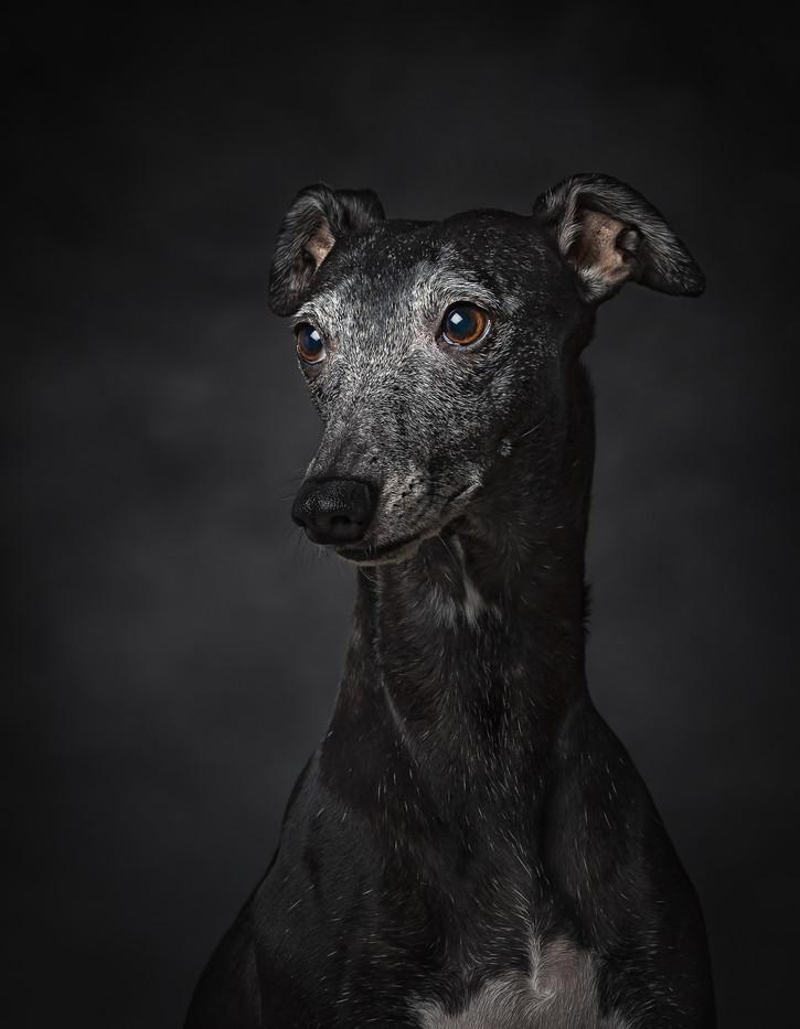 norfolk-dog-photographer-EL1A9086-Edit.j