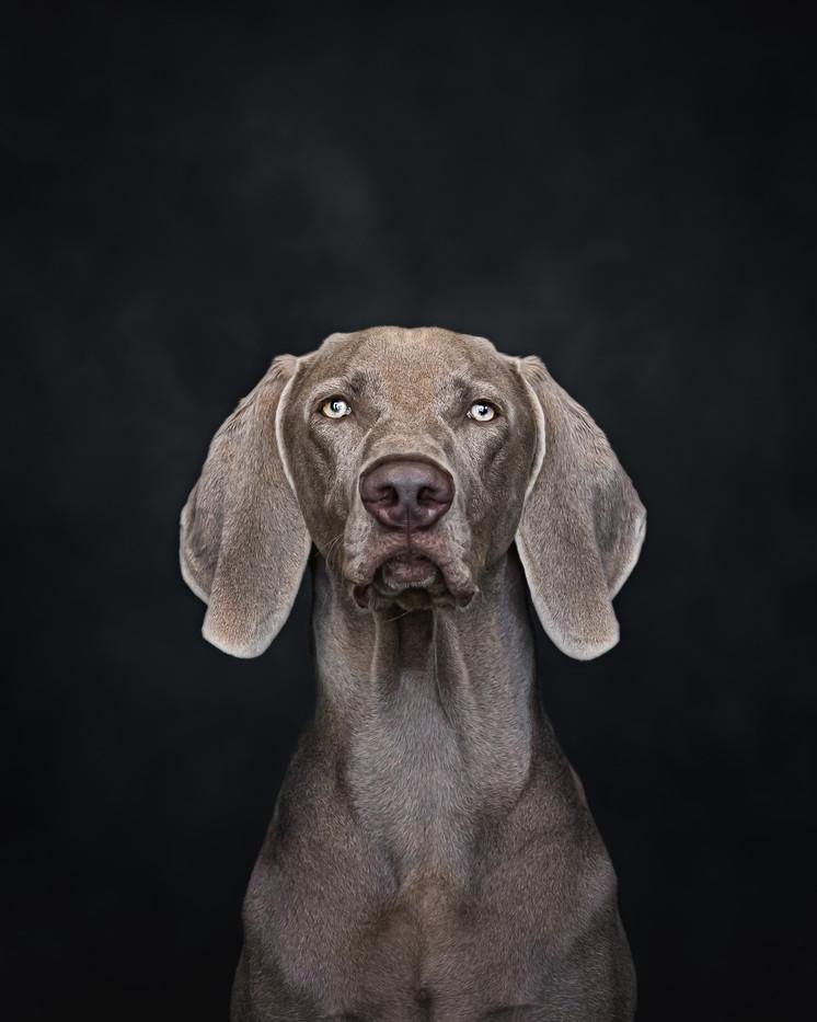 norfolk-dog-photographer-EL1A4107-Edit.j