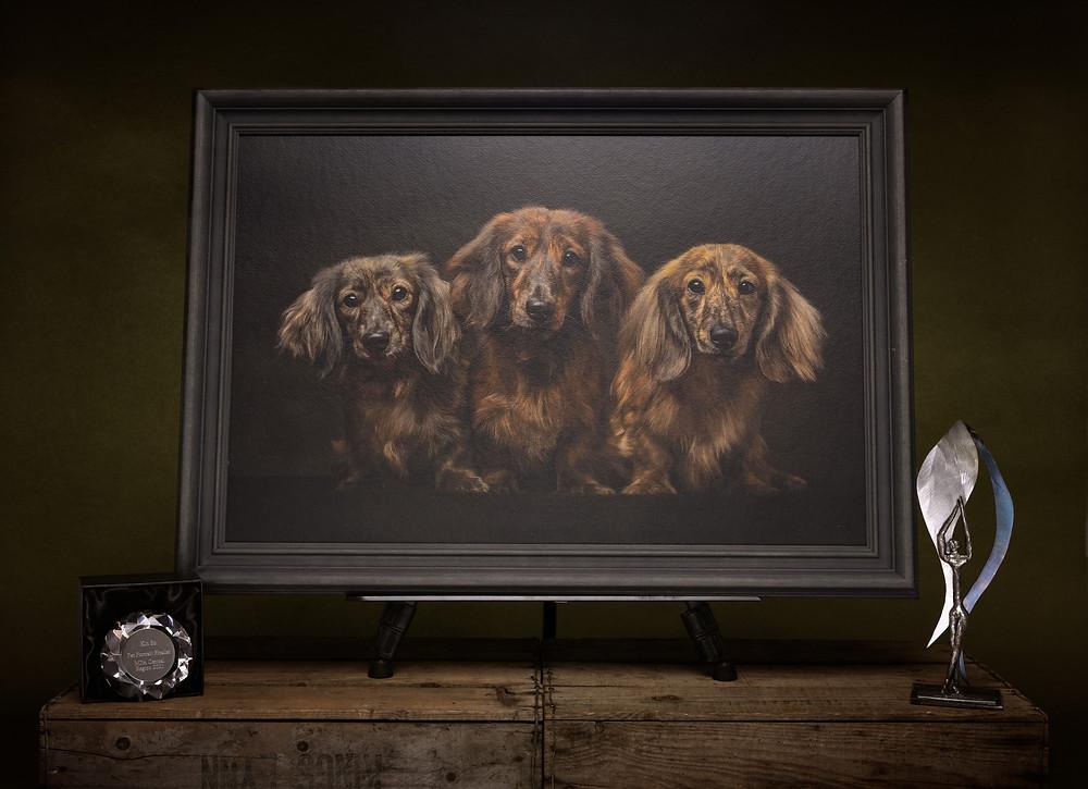 Norfolk dog photographer photography pet portrait award winner artwork