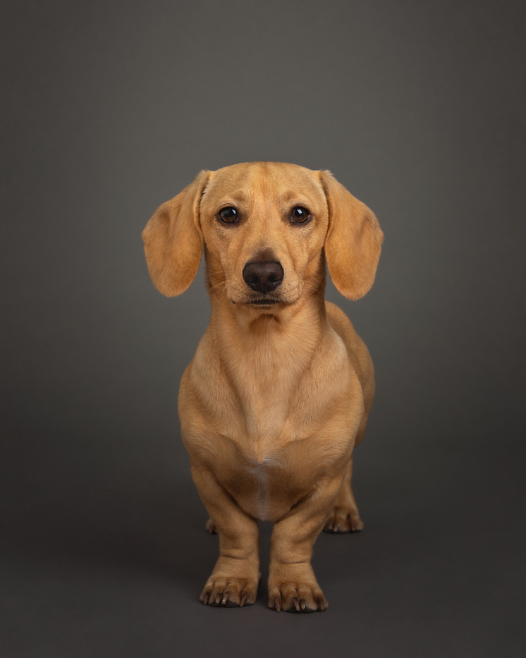 norfolk-dog-photographer-EL1A4530-Edit f