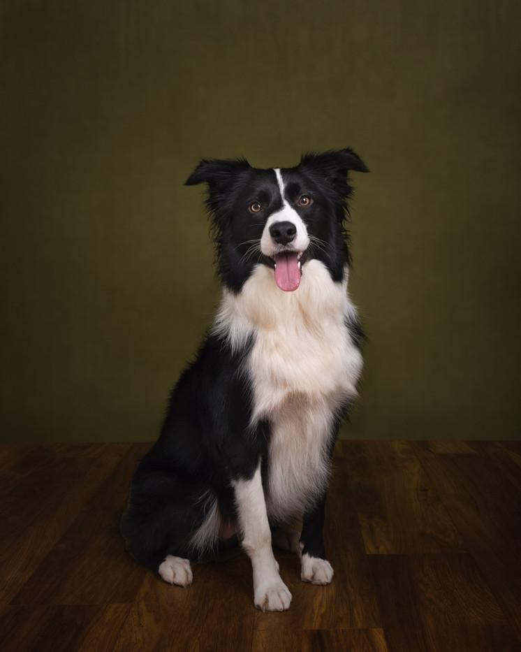 norfolk-dog-photographer-1T8A6750-Edit.j