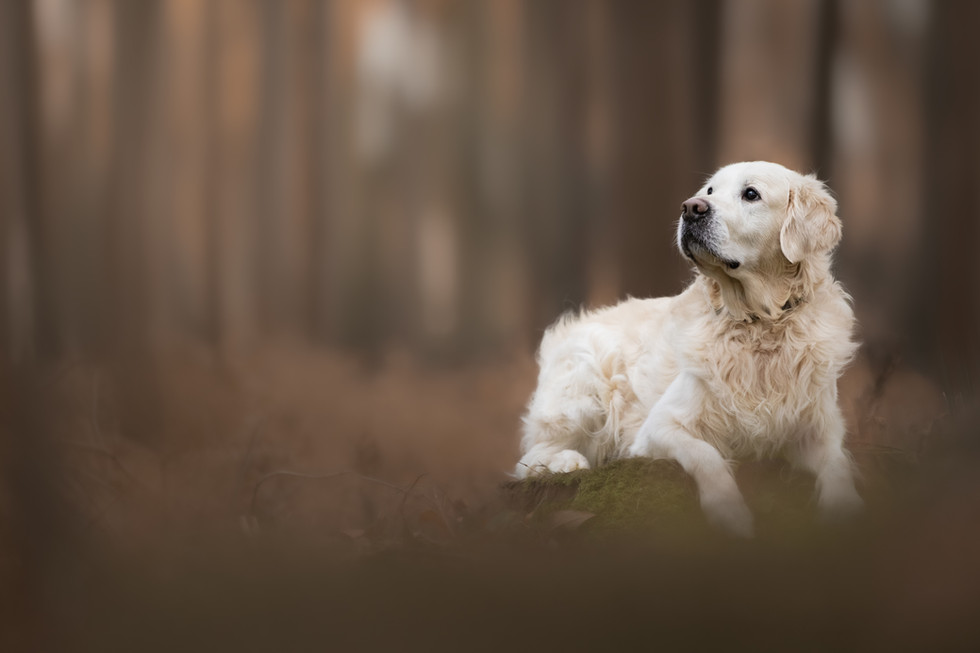 norfolk-dog-photographer-1T8A6472-Edit2.