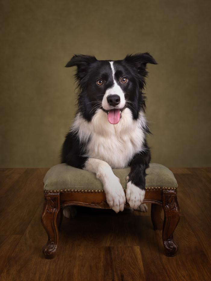 norfolk-dog-photographer-1T8A6762-Edit.j