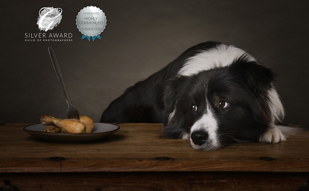 dog photography award border collie chicken