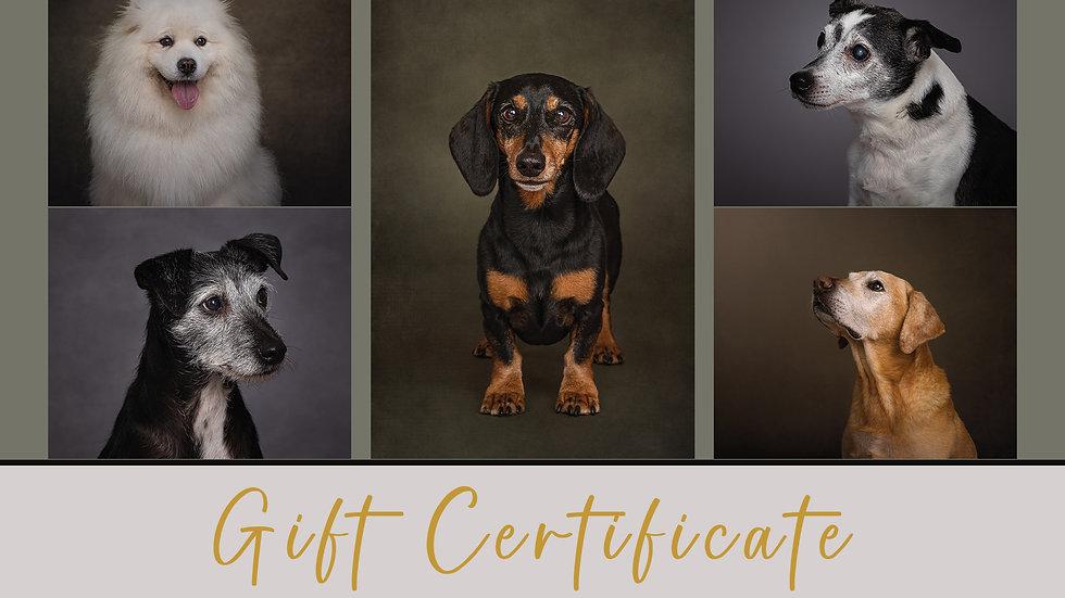 Fun Taster Dog Portrait Session Gift Certificate