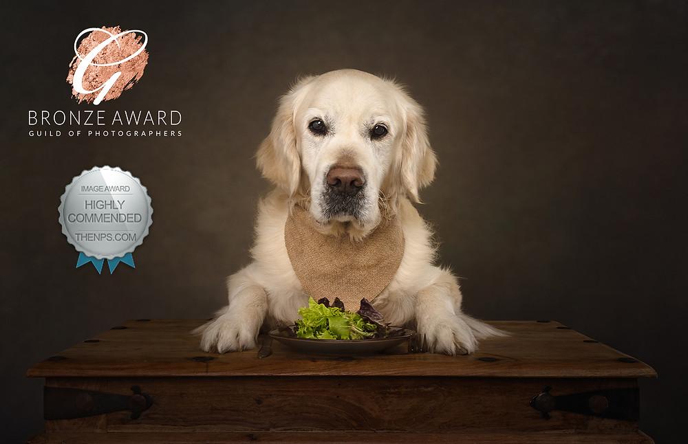dog photography award golden retriever gundog