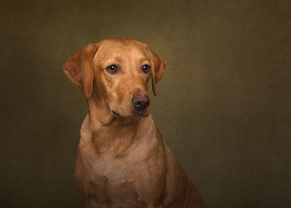 norfolk-dog-photographer-1T8A6160-Edit.j