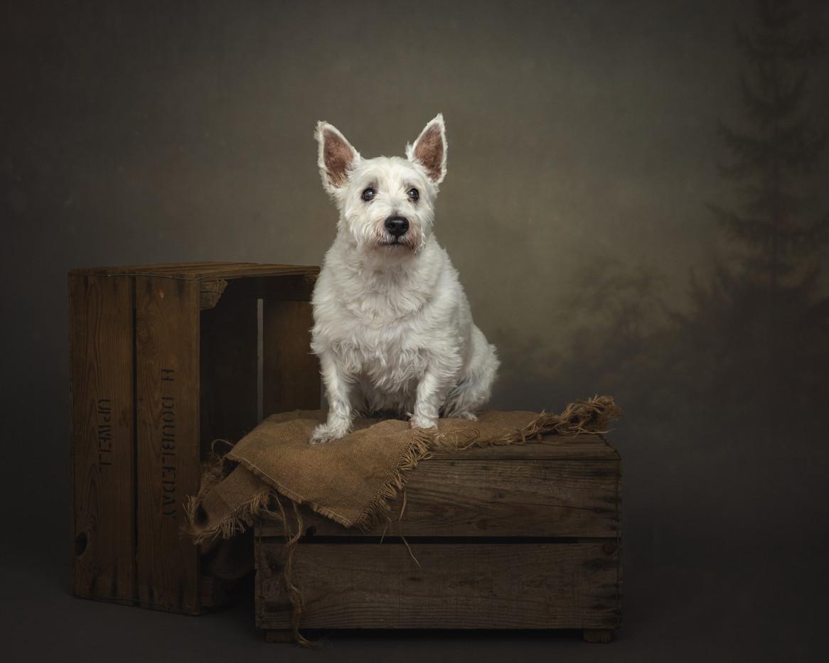 norfolk-dog-photographer-1T8A5099.jpg