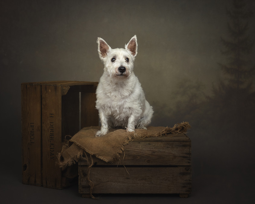 norfolk-dog-photographer-1T8A5099.jpg