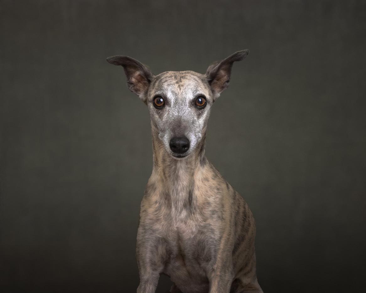 norfolk-dog-photographer-1T8A5262-Edit.j