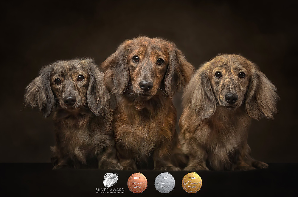 Norfolk dog photographer photography pet portrait award winner
