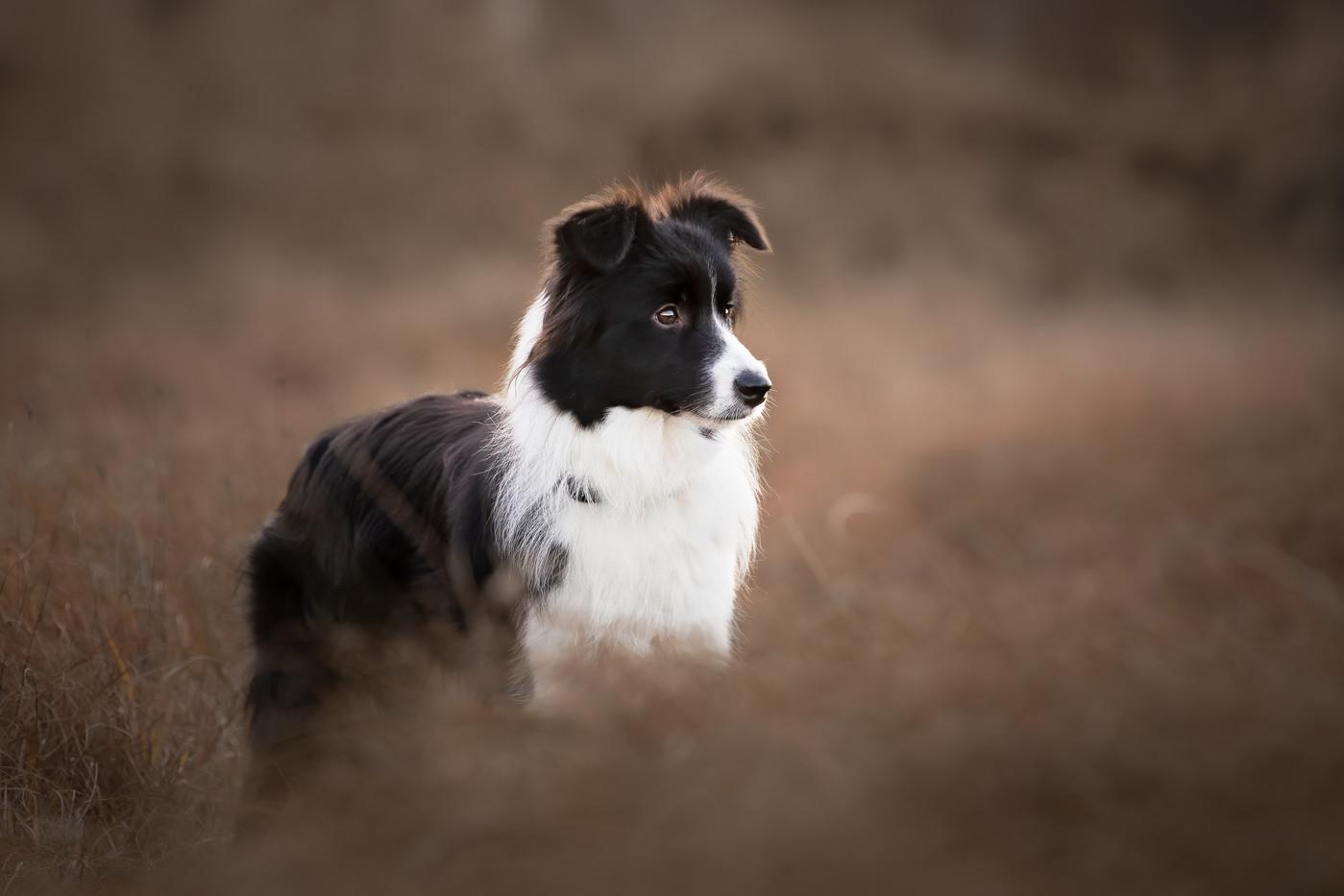 norfolk-dog-photographer-1T8A6256-Edit-2