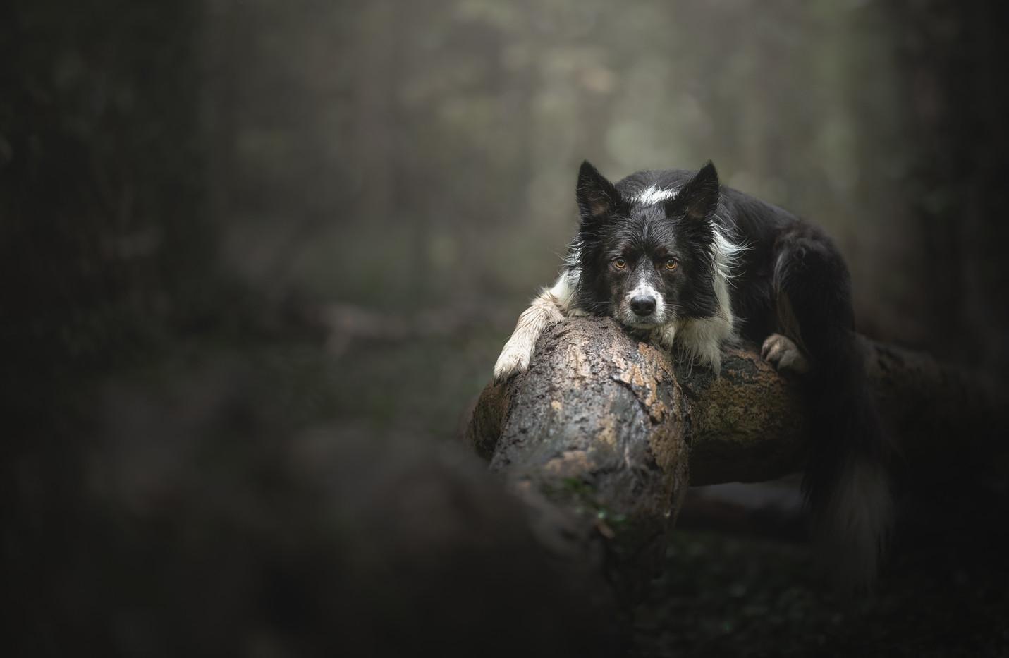 norfolk-dog-photographer-EL1A4765-Edit2.