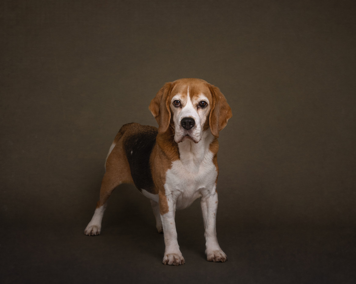 norfolk-dog-photographer-1T8A6082 2.jpg