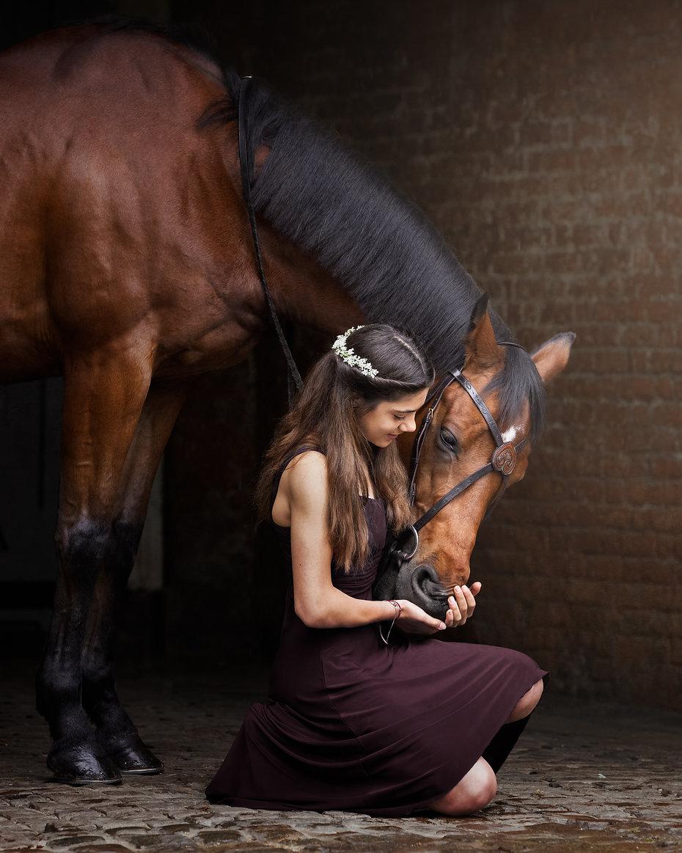 norfolk-dog-equine-photographer-1T8A1757
