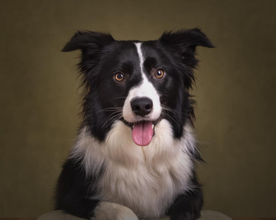 norfolk-dog-photographer-1T8A6762-Edit-2