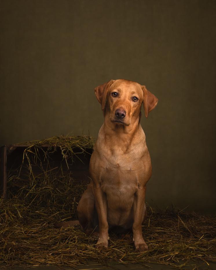 norfolk-dog-photographer-1T8A6191-Edit.j
