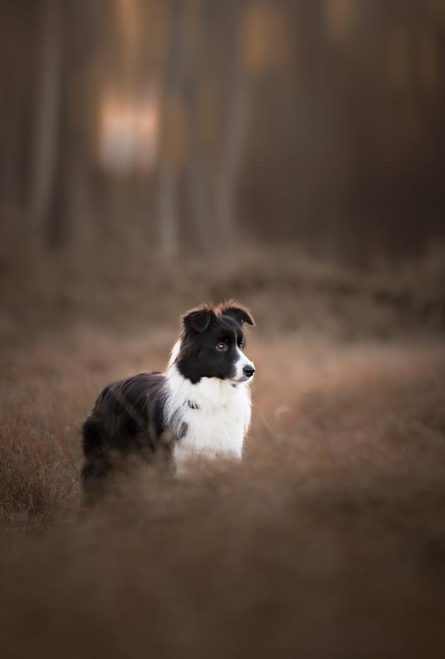 norfolk-dog-photographer-1T8A6256-Edit.j