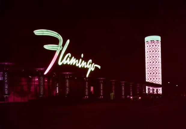Flamingo (301).jpg