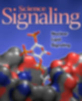 Science Signaling Cover image for June 19, 2012, showing Nuclear Lipid Signaling through SF-1 bound to PIP2.  Image is a simulation, not a crystal structure.