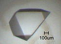 Image of a 1mm crystal of SF-1 boudn to PIP3 phospholipid, crystallography crystal, structural biology done in the Blind Lab Ray Blind Vanderbilt