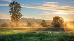 Seasons Of Mists....