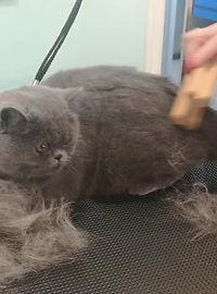 Профессиональные фурминаторы Zooro, идеальное решение для всех видов кошек с короткой и средней длиной шерсти. Избавьте квартиру от шерсти и подготовьте питомца к соревнованиям! Доставка по Москве и России.