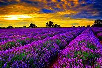 Beautiful_Landscape.jpg