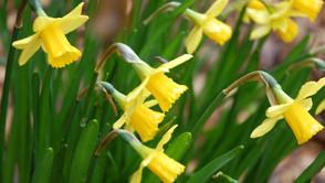 Mar. 8, 2020 - 2nd Sunday of Lent
