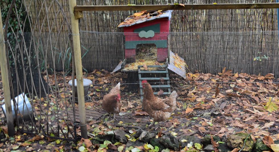 POULAILLER avec deux poules.JPG