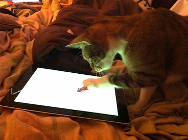 cat with ipad