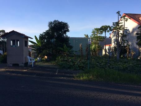 Urban gardens in Curridabat: A maternity leave mini-IP