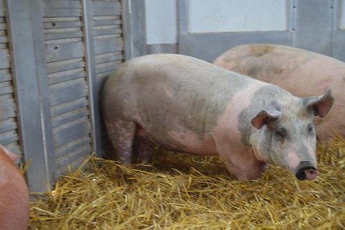 Roaster Hogs