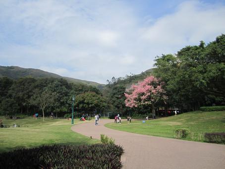 Inspiration Lake Recreation Centre- Pink Floss-silk Tree