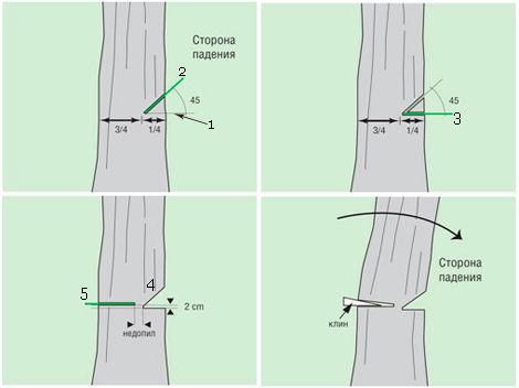 Как самостоятельно спилить дерево. Последовательность