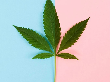 What is CBD and what's all the hype about?