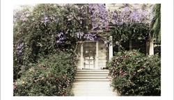 wistaria
