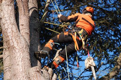 Climbing Arborist Kyle Ellis