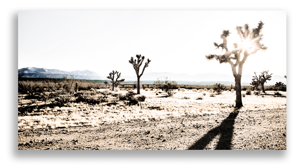 "Joshua Tree in Winter - Joe Bellissimo - 44"" x 27"" Printed on High Gloss Aluminum with Hanging Cleat - $899 - email info@wendybellissimo.com for details."