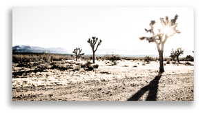 """Joshua Tree in Winter - Joe Bellissimo - 44"""" x 27"""" Printed on High Gloss Aluminum with Hanging Cleat - $899 - email info@wendybellissimo.com for details."""