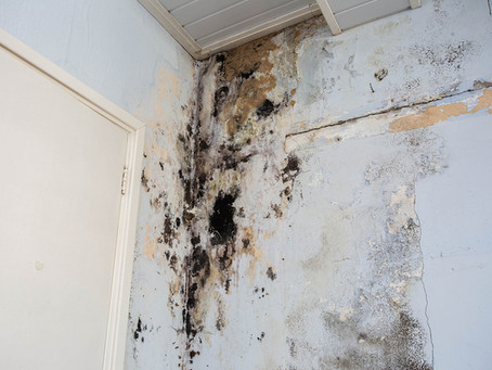 Mold Inspections in CT