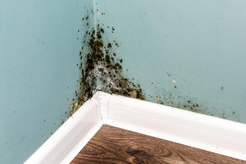 mold-in-the-home.jpg