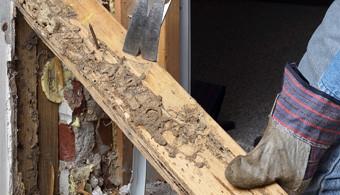 Termites In Connecticut