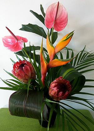 tf4- Pink Tropical Display
