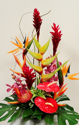 TF6  yellow and red tropical display