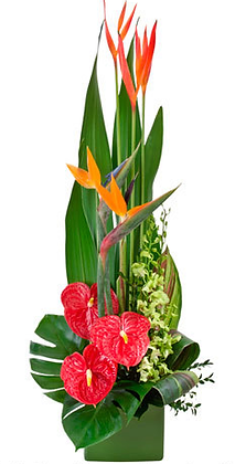 TP1 Tropical flower display