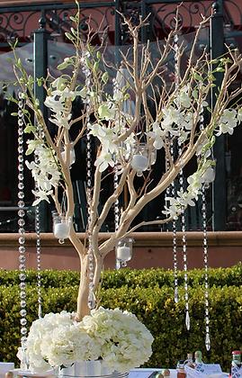 M4- Manzanita tree with flowers