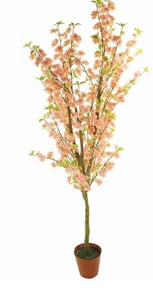 ACT2 Peach Blossom Tree