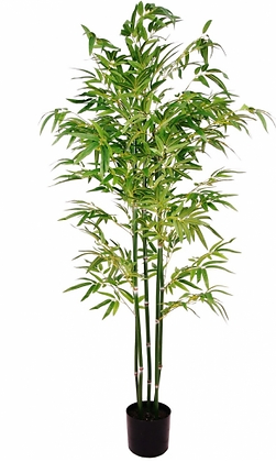 ACT6 Bamboo tree hire
