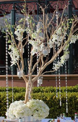 Manzanita tree with flowers